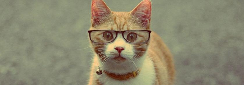 imagenes-de-gatos-con-lentes-para-portadas-de-facebook